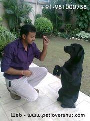 Dog Boarding and Training Centre in Delhi