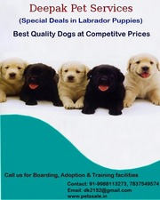 Best Pets are available for sale in Chandigarh - 07837549574