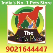 THE PETS PARK - TOP QUALITY BREED
